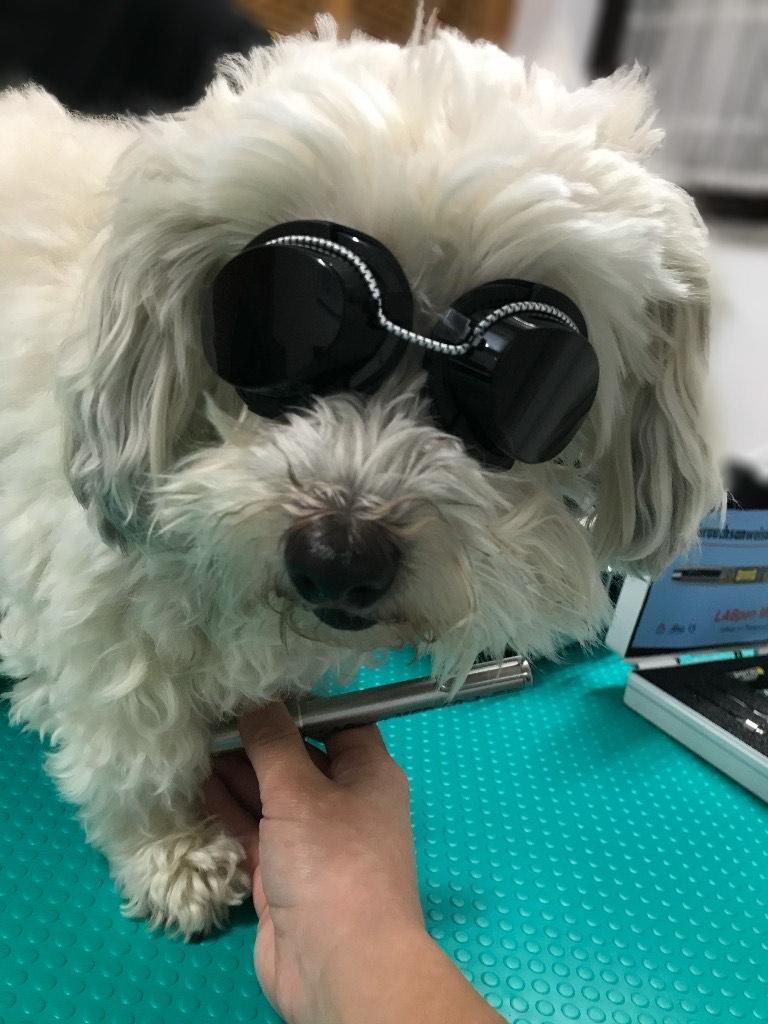 Lasertherapie Hund